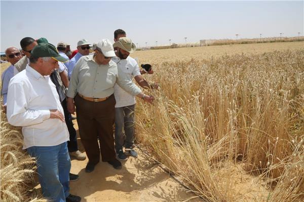 وزير الزراعة: يفتتح موسم حصاد القمح بمشروع غرب غرب المنيا