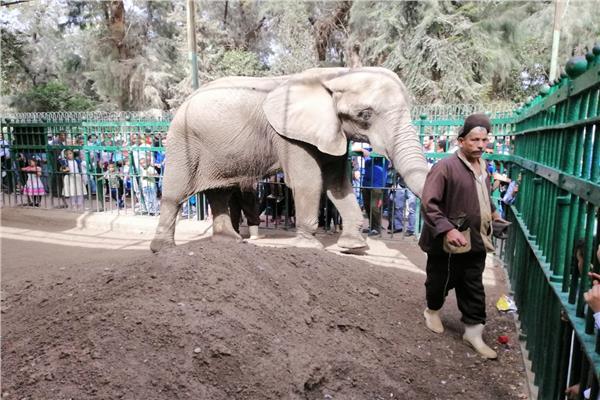 «حديقة الحيوان» 120 ألف زائر استمتعوا بشم النسيم.. وهذه مواعيدنا في رمضان