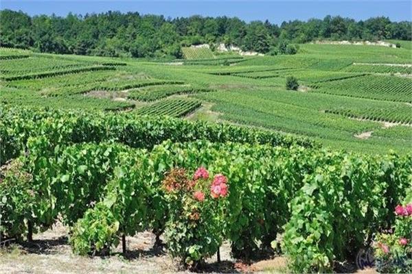 «الزراعة» تبحث آفاق التعاون الزراعي مع فرنسا
