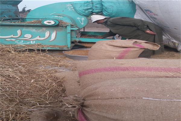 توريد ٥٤٢ألف طنا من القمح لصوامع وشون الشرقية