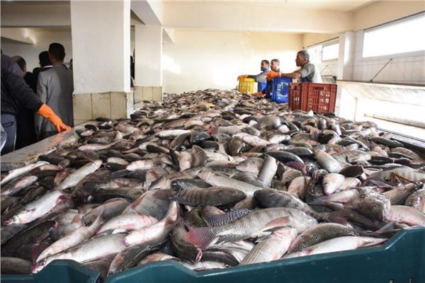 مصر الأولى أفريقيا والثامنة عالميا في إنتاج الأسماك
