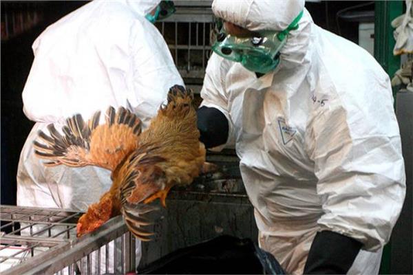 الزراعة تحيل ملف قرض البنك الإسلامي المخصص لمكافحة انفلونزا الطيورللنيابة