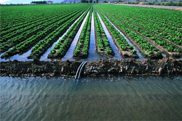 الزراعة تنظم ندوات إرشادية للحد من الآثار الضارة لـ«التغيرات المناخية» بالمنوفية