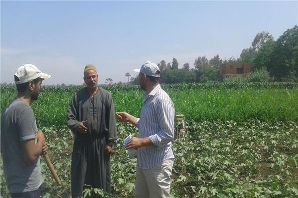 زراعة 1573 فدانا بمحصول القطن في المنوفية