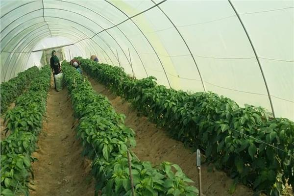 منتجات الصوب الزراعية بالخارجة