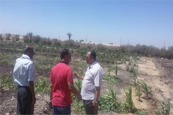 البدء فى زراعة 1000 شتلة موالح بمزرعة الوادى الاسيوطى