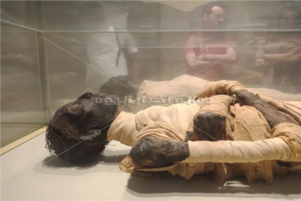 قاعة المومياوات الملكية في المتحف المصري بالتحرير