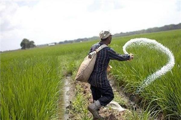 الزراعة تواصل صرف الأسمدة للمحاصيل الصيفية