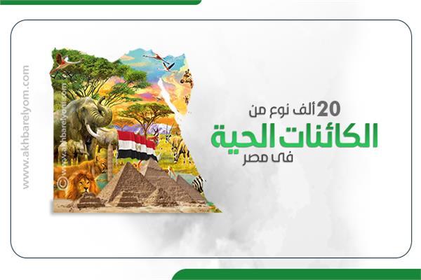 إنفوجراف| 20 ألف نوع من الكائنات الحية في مصر