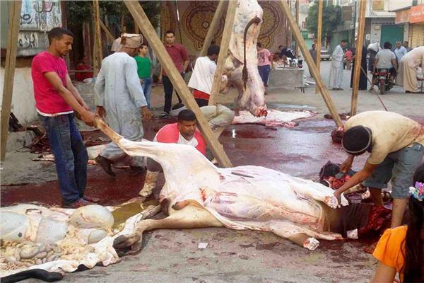 ذبح الأضاحي في الشوارع