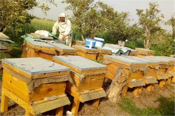 لمربي النحل ومنتجي العسل.. 4 نصائح لمواجهة تأثير ارتفاع درجات الحرارة