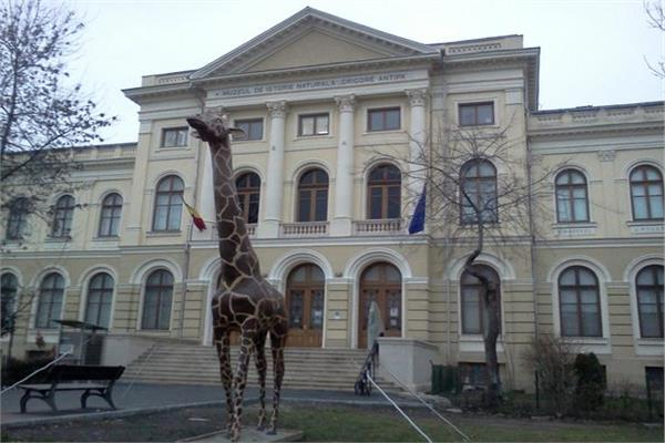 متحف بوخارست