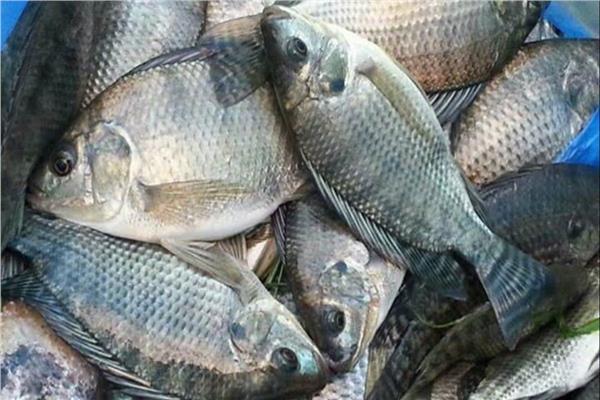 الاستزراع السمكي يحقق طفرة في إنتاج الأسماك.. وأكثرمن 100 نوعمن البلطي حول العالم