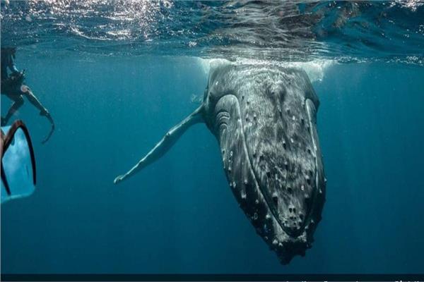 الحيتان البحرية