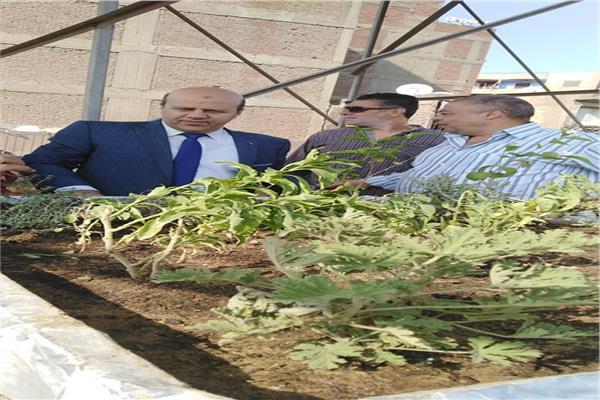 مبادرة زراعة أسطح المنازل بباب الشعرية