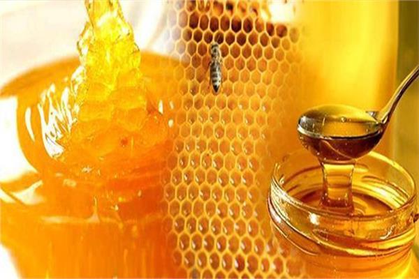 اطلاق أول مهرجان لعسل النحل المصري 16 اكتوبر المقبل