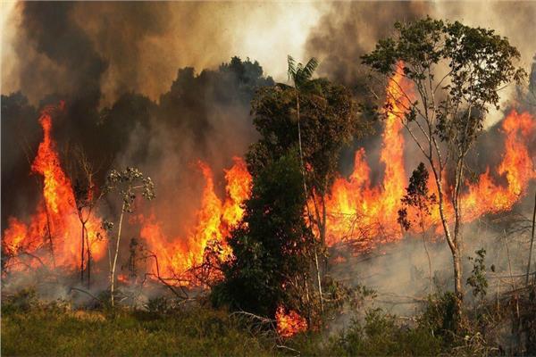 72 الف حريق بغابات الامازون