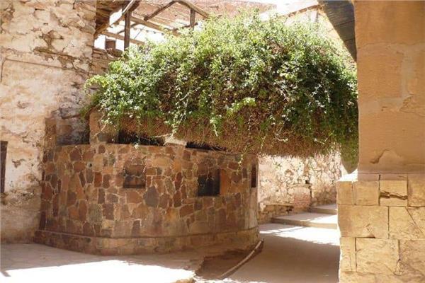 شجرة العليقة المقدسة