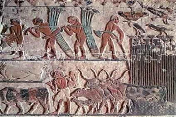 موسم الحصاد عند المصري القديم