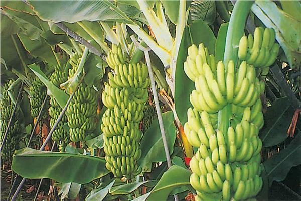 نصائح سبتمبر لحماية النباتات من السقوط