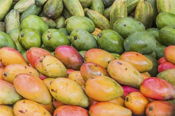 أسعار المانجو في سوق العبور الأربعاء 18 سبتمبر