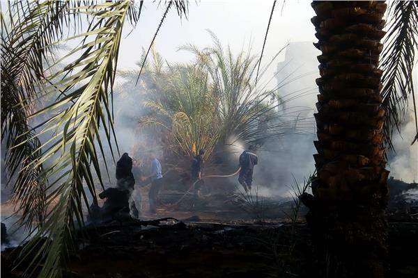 السيطرة على حريق نشب بمزارع للنخيل بمحافظة الوادي الجديد