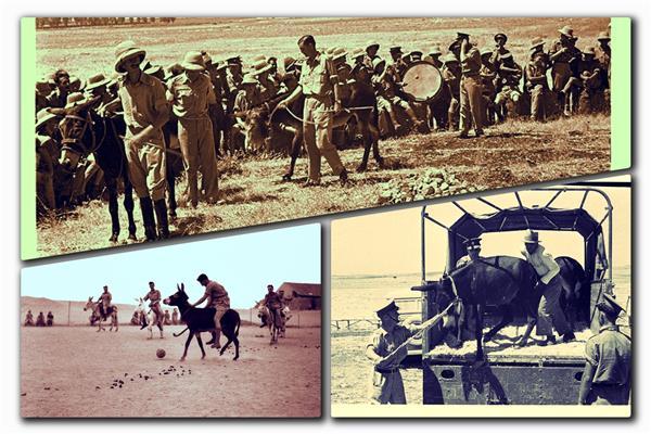 سلاح «الحمير والبغال» في الحرب العالمية.. سر ابتلاع القنابل