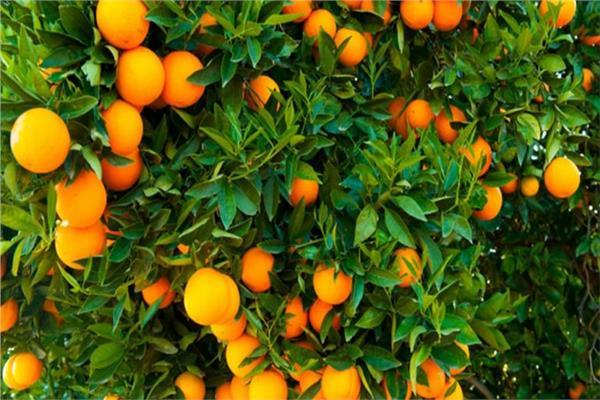 تعرف على أبرز المحاصيل الشتوية التي يتم تصديرها للخارج
