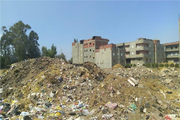 قرية سرسو مركز طلخا