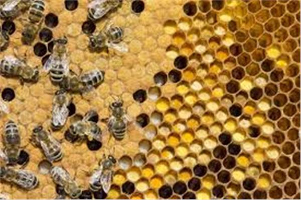 دورة تدريبية حول نحل العسل ومنتجاته