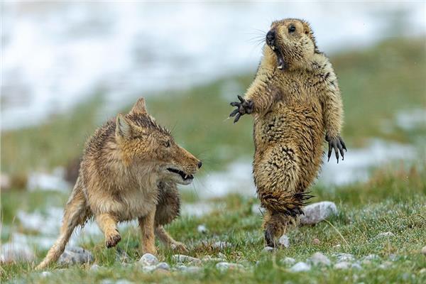 مسابقة الحياة البرية لعام 2019