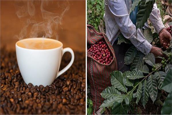 صدمة لمحبي القهوة.. تختفي 2080
