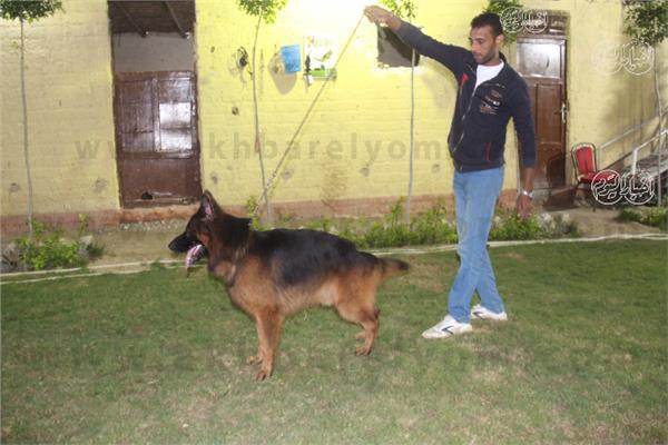 مزرعة أبو نور لتدريب الكلاب