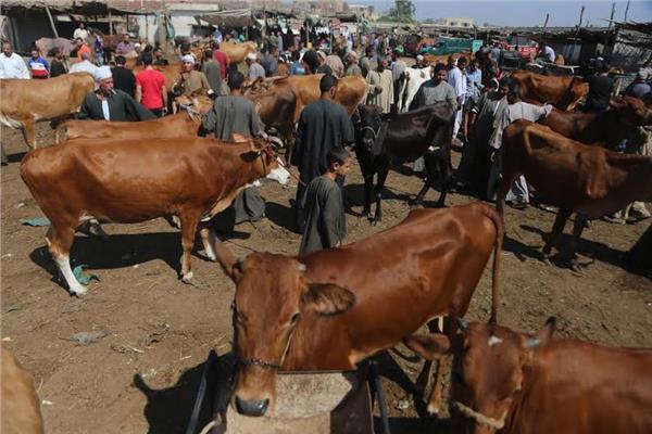 مزارع الماشية