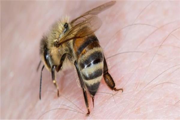 سم النحل