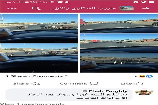 مرسى علم تحظر تجول الأغنام بشوارع المدينة