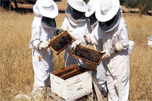 لمواجهة الطقس البارد|«الزراعة» توجه 10 توصيات لمربي النحل