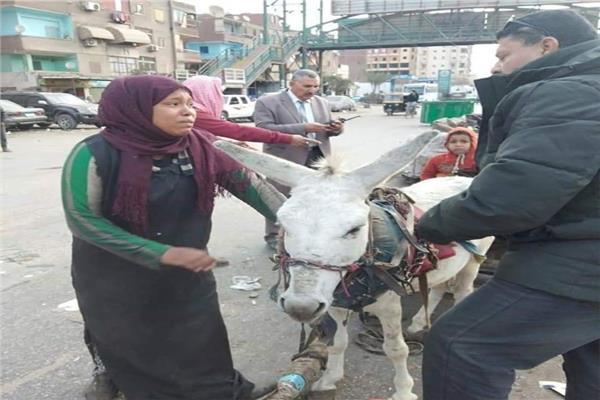 خاص| أول تعليق لرئيس حي شرق شبرا الخيمة على صورة «سيدة الكارو»