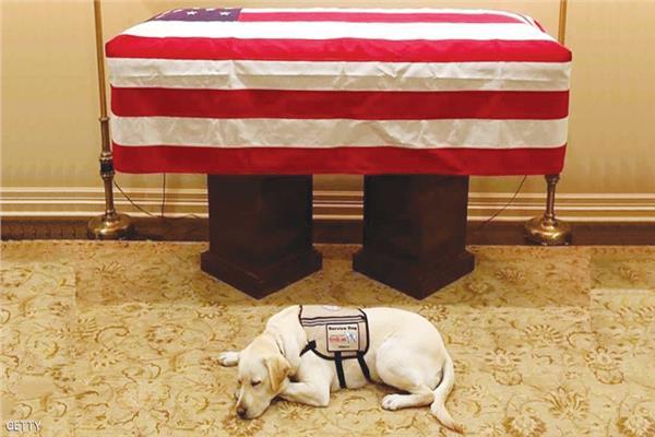 كلاب لا ينساها البيت الأبيض.. أحدها أنقذ رئيساً أمريكياً من الموت