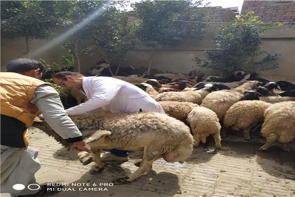 قافلة بيطرية من القومي للبحوث لتوعية الفلاحين بمشاكل الثروة الحيوانية