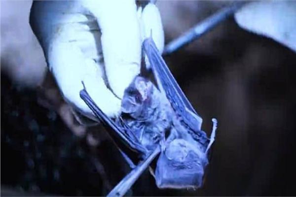 فيلم وثائقي يجدد الشك في «تصنيع» فيروس كورونا.. عمدا
