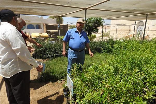 د.عبدالله زغلول نائب رئيس مركز بحوث الصحراء