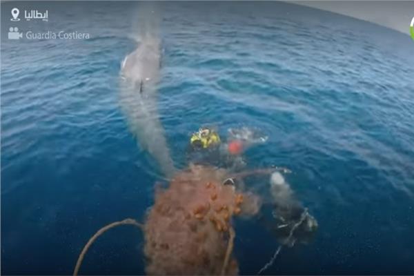 إنقاذ حوت طوله 10 أمتار بعد تعلقه في شبكة صيد