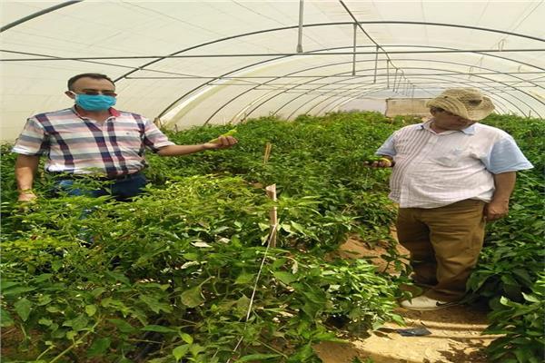 صور  «الزراعة» تطمئن على الدور الإرشادي لمحطة بحوث الصحراء في مريوط