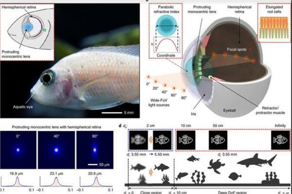 """بعمق """"اللانهاية"""".. العلماء يصنعون كاميرا موبايل خارقة من عيون الأسماك"""