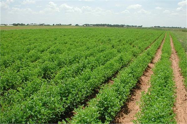 المزارع المشتركة الأفريقية