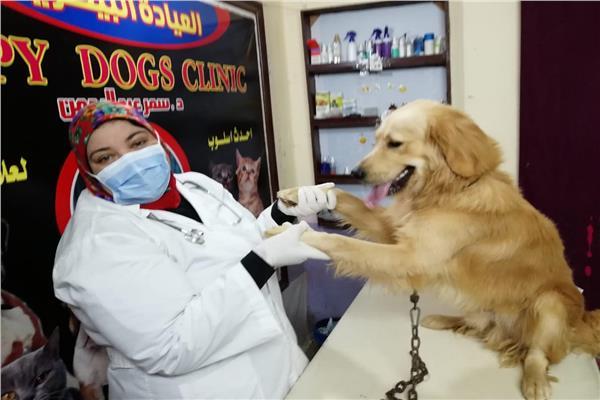 الكلاب بريئة من مرض الزهايمر