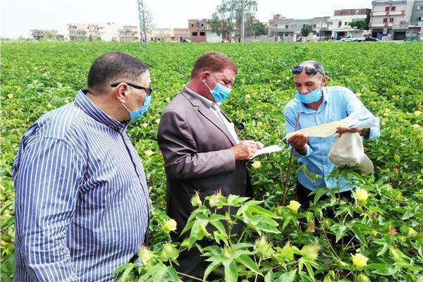 وكيل وزارة الزراعة بالبحيرة يتفقد زراعات القطن بدمنهور