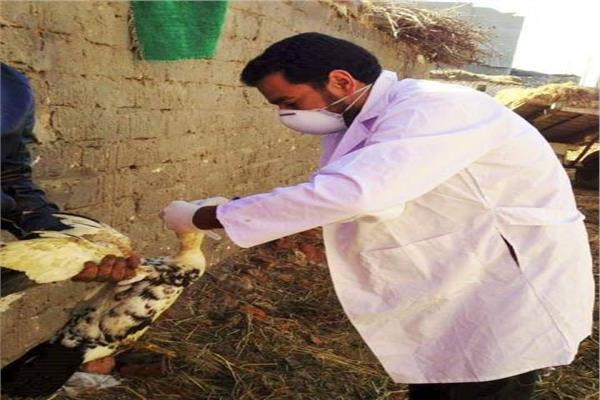 انفلونزا الطيور بالشرقية