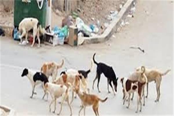 ظاهرة الكلاب الضالة